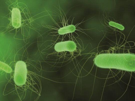 Цисты патогенных кишечных простейших что